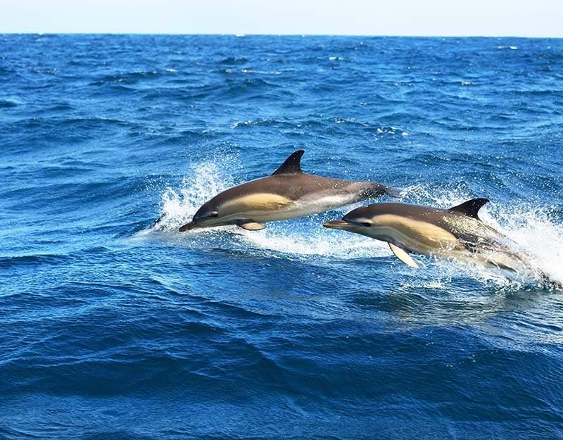 Acúmulo de parabenos prejudica vida marinha!