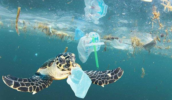 L'impatto della plastica sulla natura